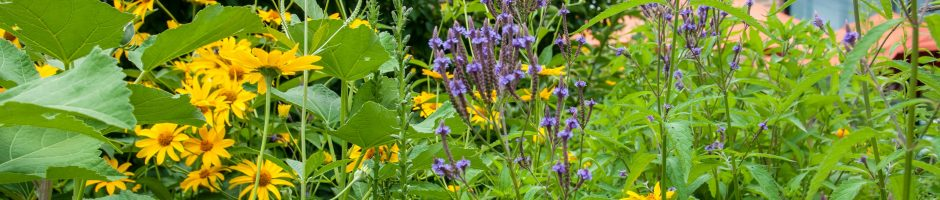 Native Plant and Pollinator Garden in bloom